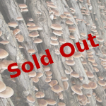 Mushroom session sold out